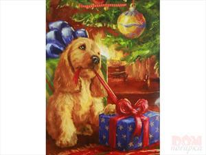 Чудеса под Новый год. Dmitry Belov