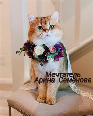 """Мечтатель(ница) (жизненная зарисовка о кошке героини книги """"Доча"""" Веры Исаевой)"""